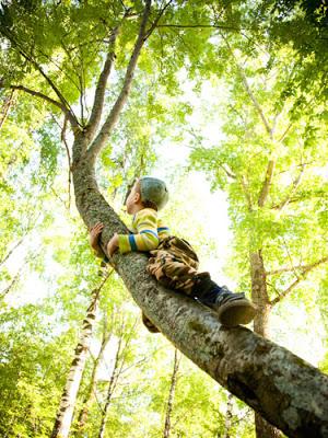 06-child-climbing-tree-lgn
